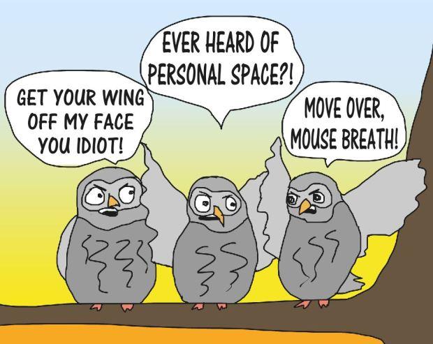 OWL 19